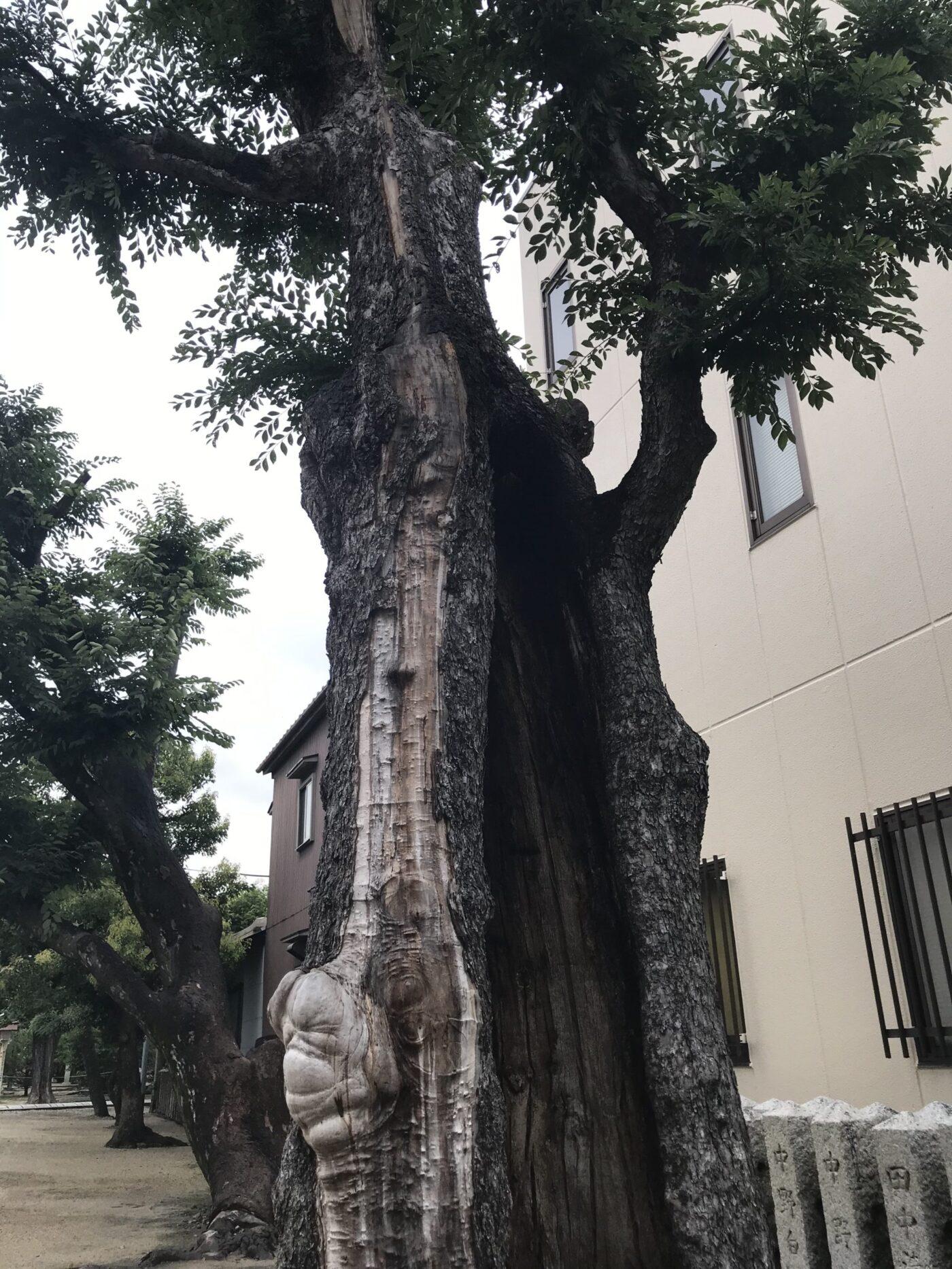 田島神社の写真